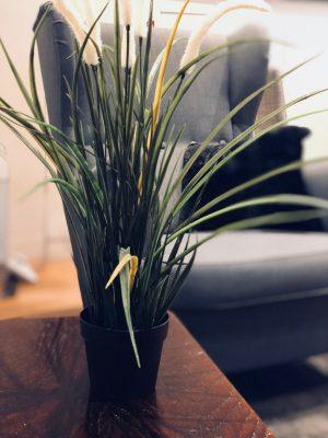 room 3 plant - medium